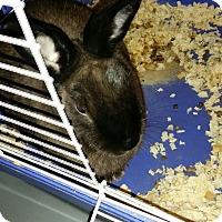 Adopt A Pet :: Benny - Conshohocken, PA