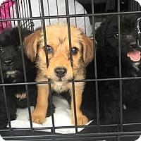 Adopt A Pet :: Winkin - Rockaway, NJ