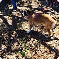 Adopt A Pet :: Babe - Hartford, VT