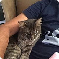 Adopt A Pet :: Kira - Novato, CA