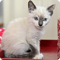 Adopt A Pet :: Trista - Davis, CA
