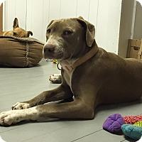 Adopt A Pet :: Janis Joplin - Snyder, TX