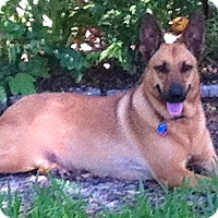Adopt A Pet :: Abby - St Petersburg, FL