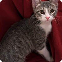 Adopt A Pet :: Aspen - Addison, IL