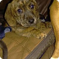 Adopt A Pet :: Tia - Charlestown, RI