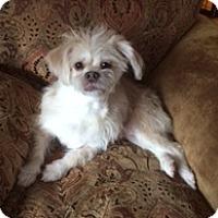 Adopt A Pet :: Rudy - N. Babylon, NY