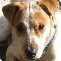 Adopt A Pet :: CHARLIE - Westmont, IL