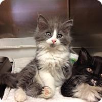 Adopt A Pet :: H-1 B - Triadelphia, WV
