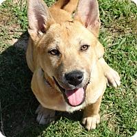 Adopt A Pet :: Sasha - Lebanon, CT