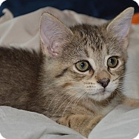 Adopt A Pet :: Susan - Herndon, VA