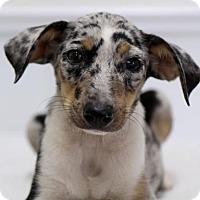 Adopt A Pet :: Corona - Groton, MA