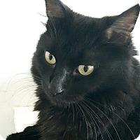 Adopt A Pet :: Sampson - Toronto, ON