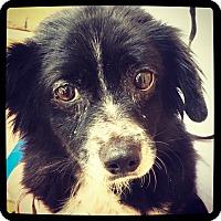 Adopt A Pet :: Daisy - Grand Bay, AL