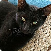 Adopt A Pet :: Tinkerbell - Austintown, OH