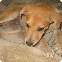 Adopt A Pet :: Callie 3165 - Toronto, ON
