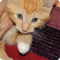 Adopt A Pet :: Elmo - tampa, FL