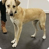 Adopt A Pet :: Lady - Valparaiso, IN