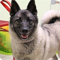 Adopt A Pet :: Nyla - Elyria, OH