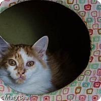Adopt A Pet :: Aaron - Prescott, AZ