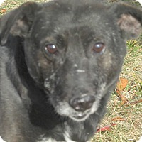 Adopt A Pet :: Blackie - Mount Sterling, KY
