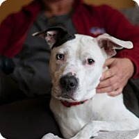 Adopt A Pet :: Allie - Eugene, OR