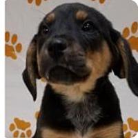 Adopt A Pet :: Rene - Patterson, NY