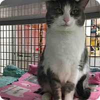 Adopt A Pet :: AUGUSTINE - Canfield, OH