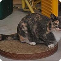 Adopt A Pet :: Blossom - Trevose, PA