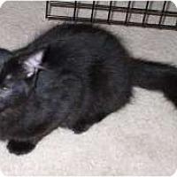 Adopt A Pet :: Elvis - Henderson, KY