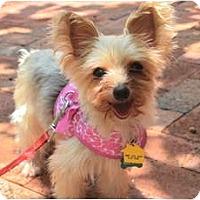 Adopt A Pet :: Petunia - Miami, FL