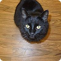 Adopt A Pet :: Memphis - Medina, OH