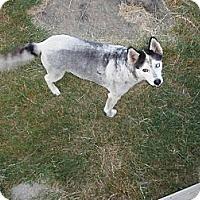 Adopt A Pet :: Buddy - Nowata, OK