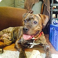 Adopt A Pet :: Xavier - Leesburg, FL