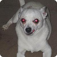 Adopt A Pet :: Bear - Floresville, TX