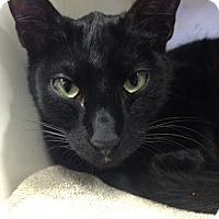 Adopt A Pet :: Harry - Redwood City, CA