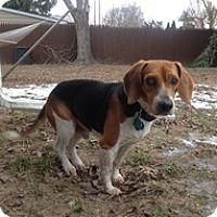 Adopt A Pet :: Sam - Seymour, CT