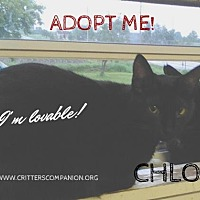 Domestic Shorthair Cat for adoption in Abrams, Wisconsin - Chloe