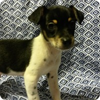Adopt A Pet :: Max - Leming, TX