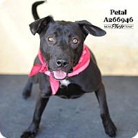 Adopt A Pet :: PETAL - Conroe, TX