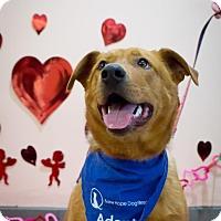 Adopt A Pet :: Edward - Saskatoon, SK