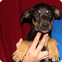 Adopt A Pet :: Enzo - Oviedo, FL