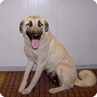 Adopt A Pet :: 16-d04-009 Blondie - Fayetteville, TN