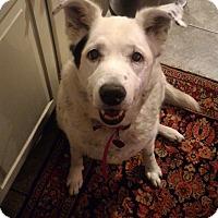 Adopt A Pet :: Evie - Wilmington, DE