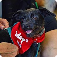Adopt A Pet :: Lani - Los Angeles, CA