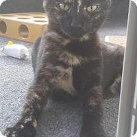 Adopt A Pet :: Hestia - Haddon Twp., NJ