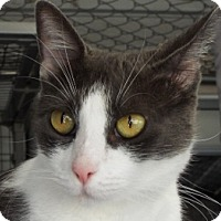 Adopt A Pet :: Spice - Grants Pass, OR