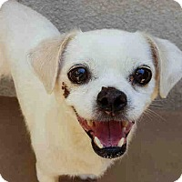 Adopt A Pet :: Celeste - Vista, CA
