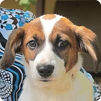 Adopt A Pet :: Eclair - Harrisonburg, VA