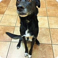 Border Collie Mix Dog for adoption in Appleton, Wisconsin - Lucy *Petsmart GB*