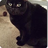 Adopt A Pet :: Teagan - Sherman Oaks, CA